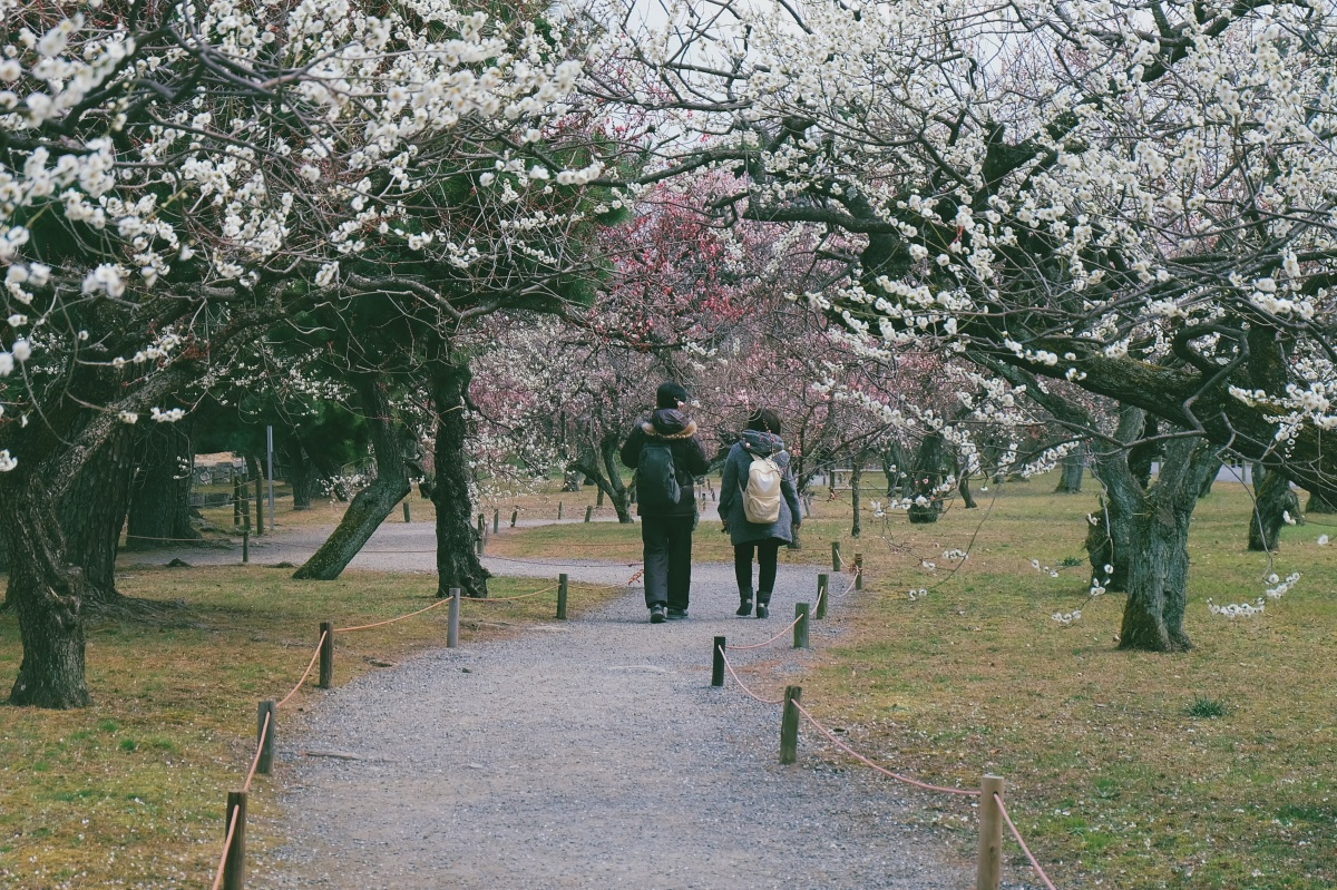 Kansai, Day 4: Kyoto (Central &Downtown)