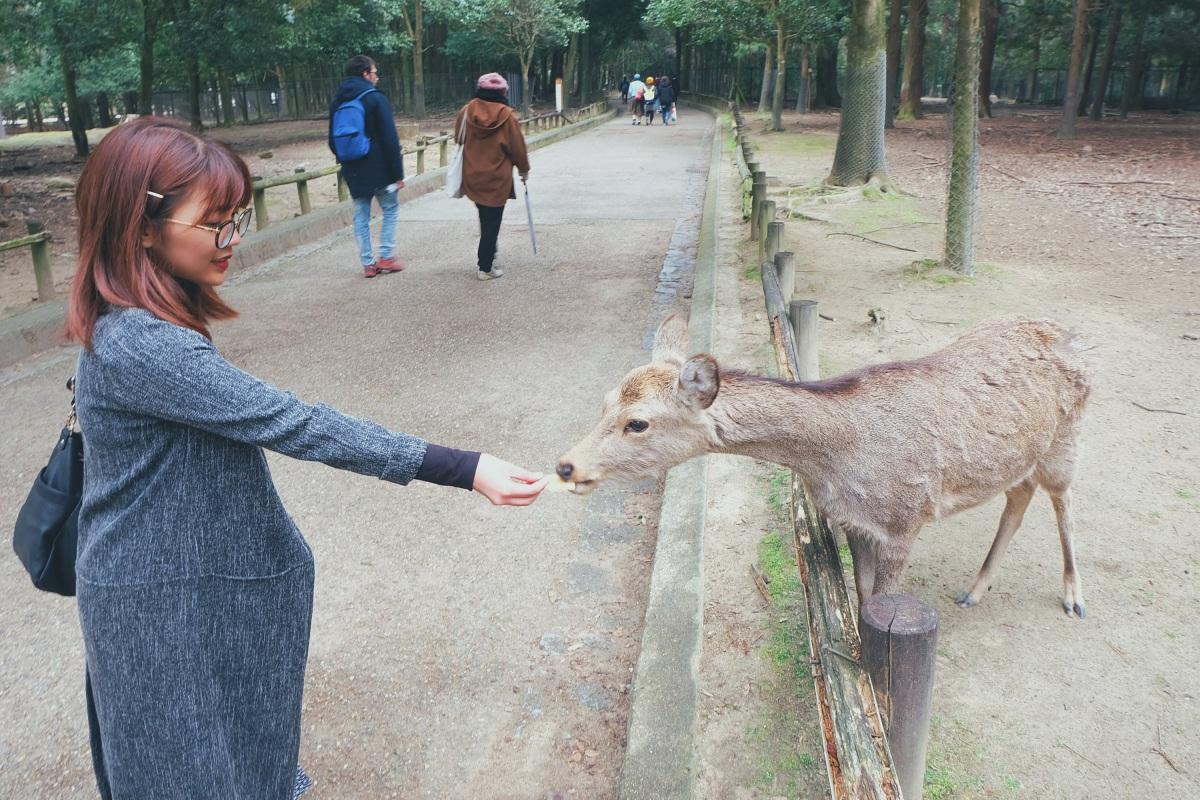 Kansai, Day 8: Nara –Osaka