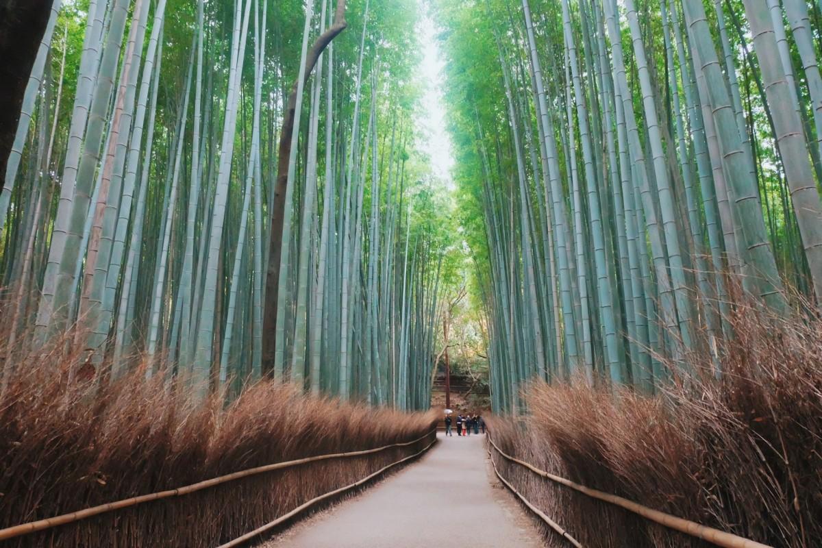 Japan, Day 2: Arashiyama Bamboo Grove(revisit)