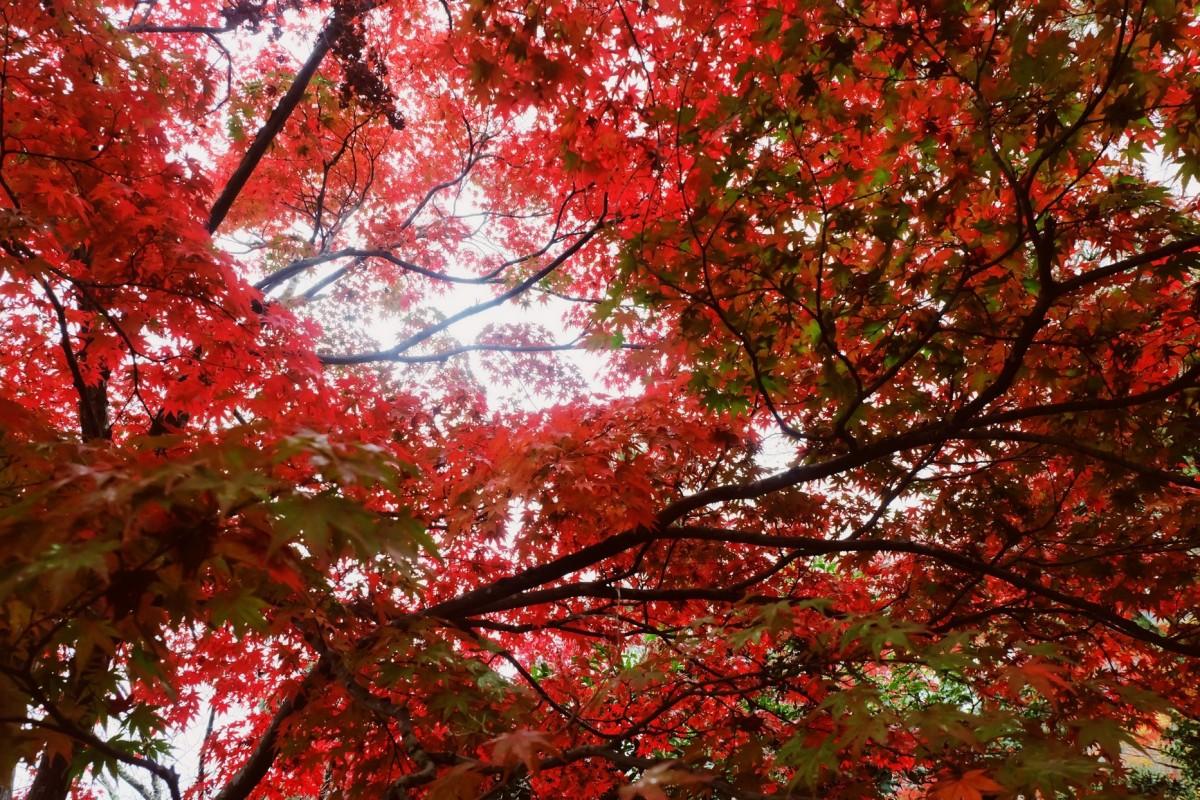 Japan, Day 2: Tenryu-ji(revisit)